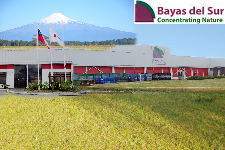BAYAS DEL SUR — CONCENTRATING NATURE