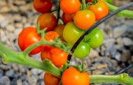 The Farmhouse launches UAE-grown pesticide-free produce