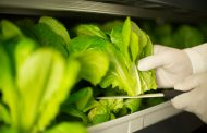 Emirates Flight Catering builds world's largest vertical farming facility in Dubai