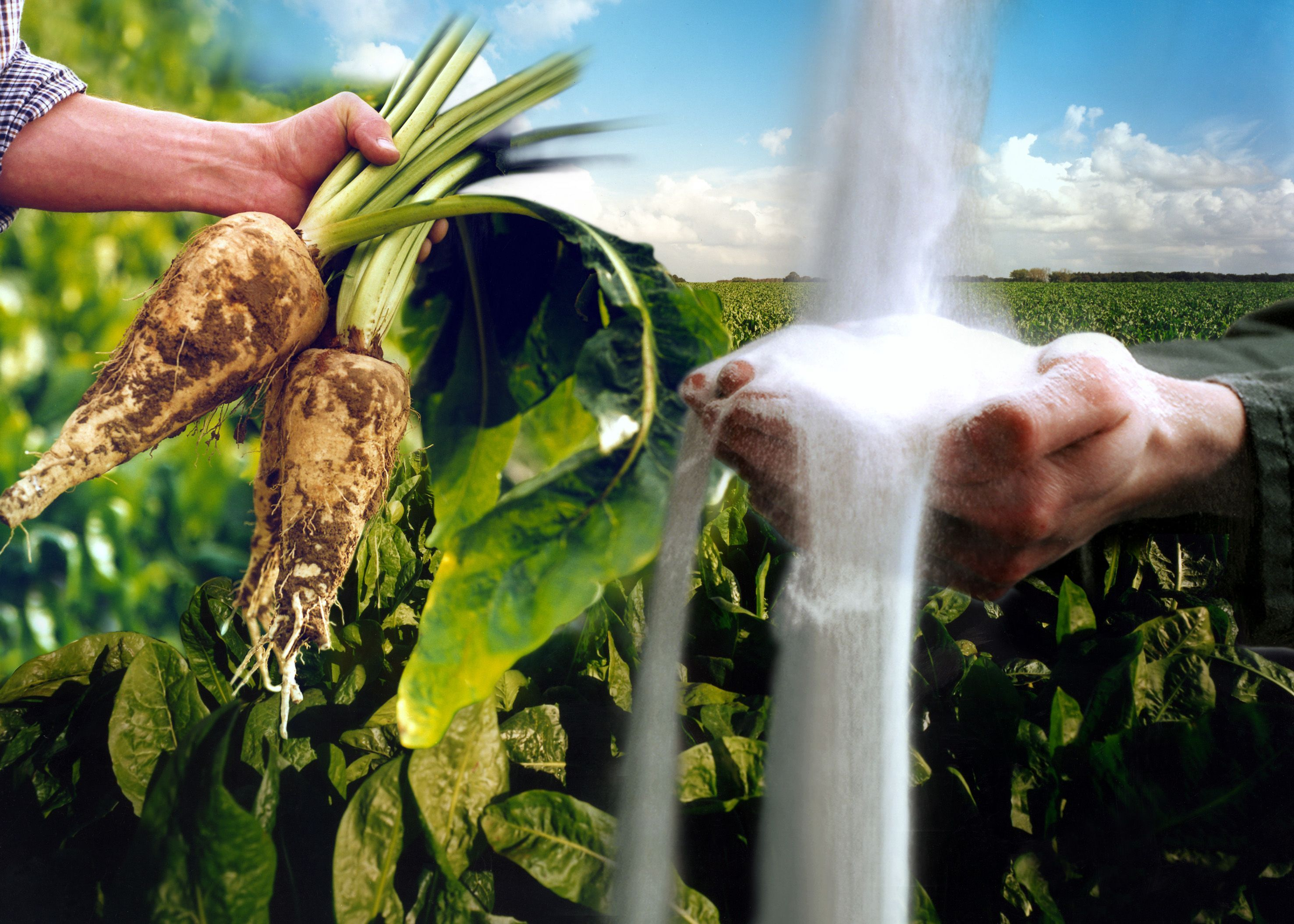 More than 100 years of experience in developing and producing functional nutrients