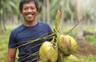 KARA, THE COCONUT SPECIALIST- Delivering Indonesia's coconut to the world