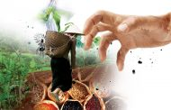 'Junk agroecology': How corporations are co-opting peoples' solutions to the food crisis